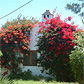 Bed and breakfast platteland Algarve